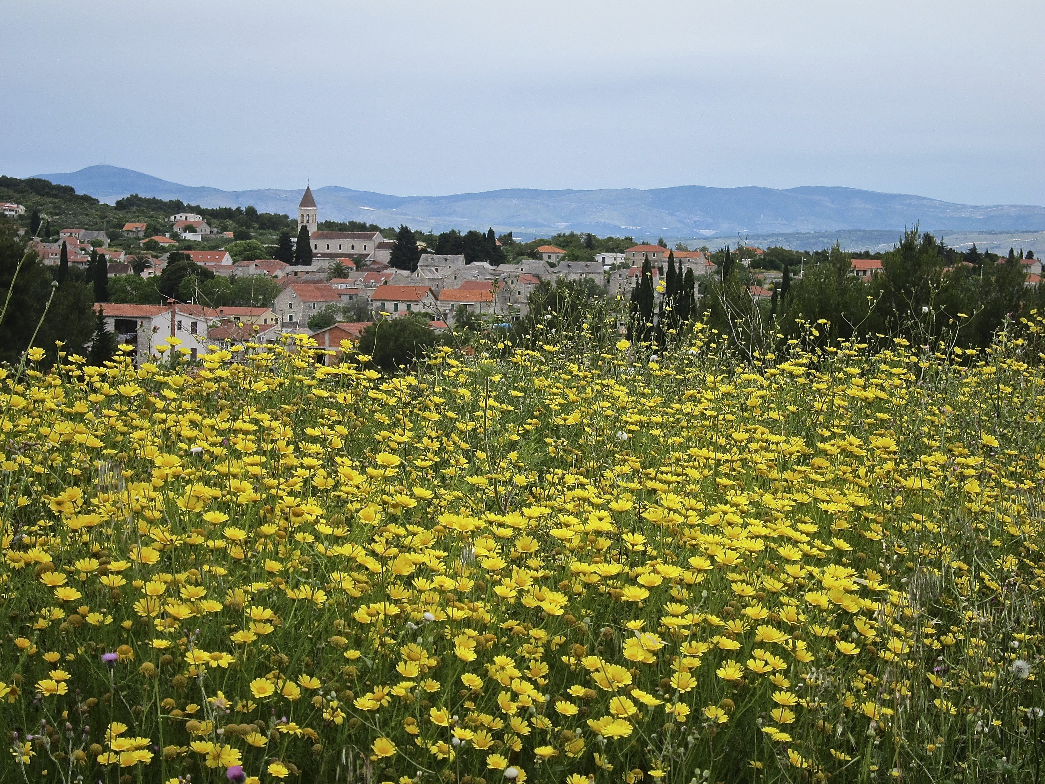 Croatia field of flowers bike tour