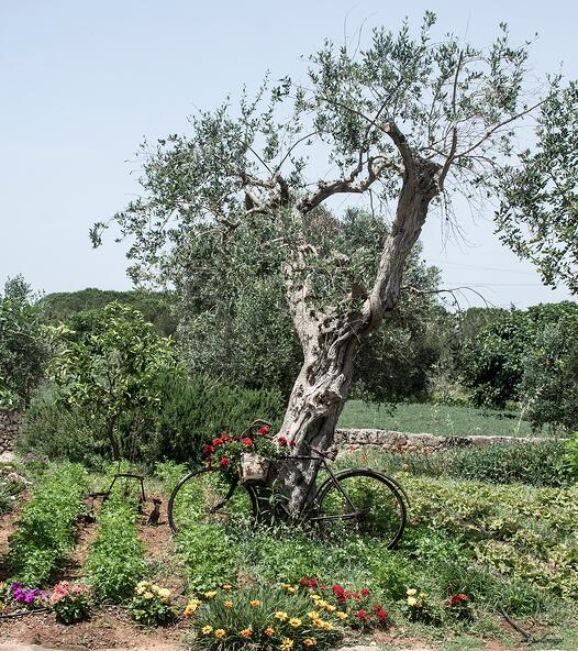 Italy bicycle tour