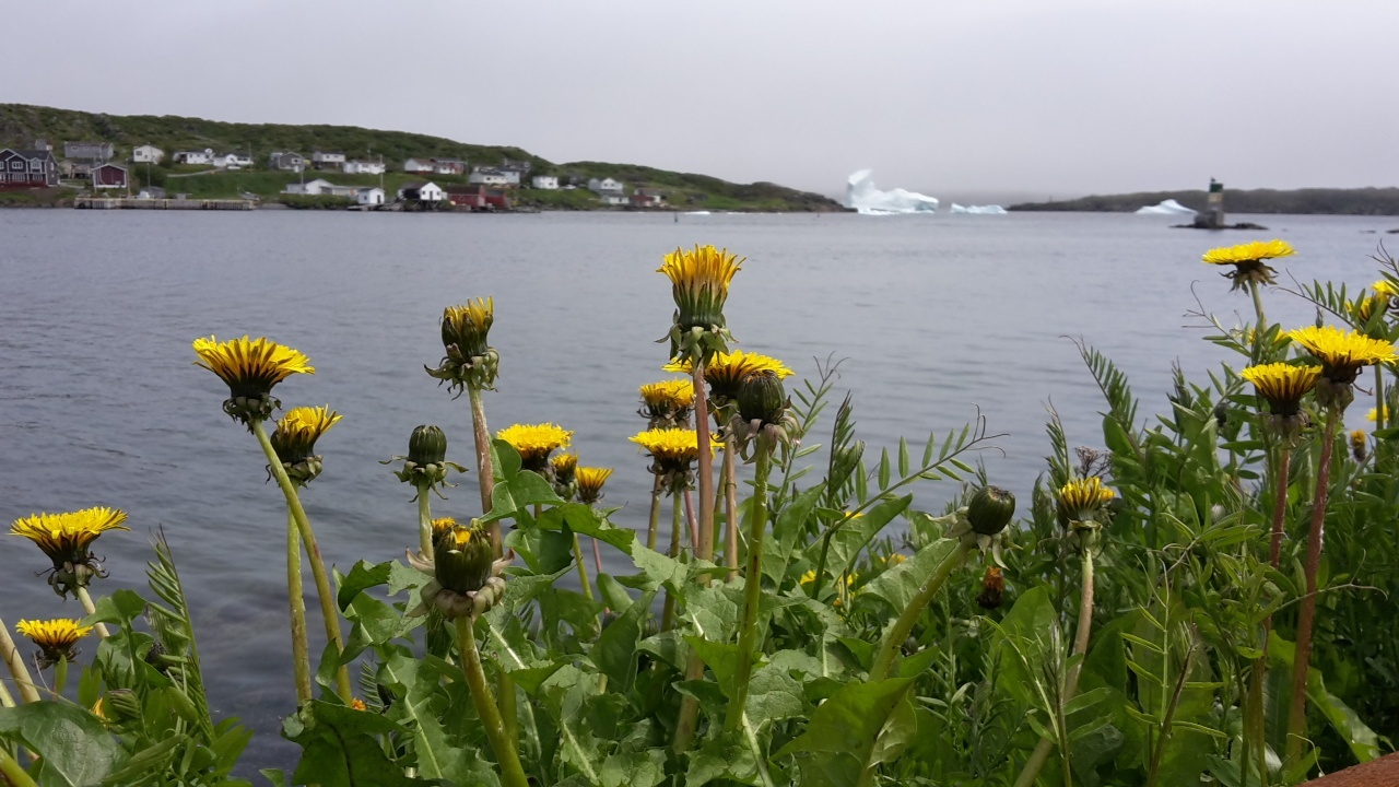 Newfoundland bicycle tour icebergs and flowers