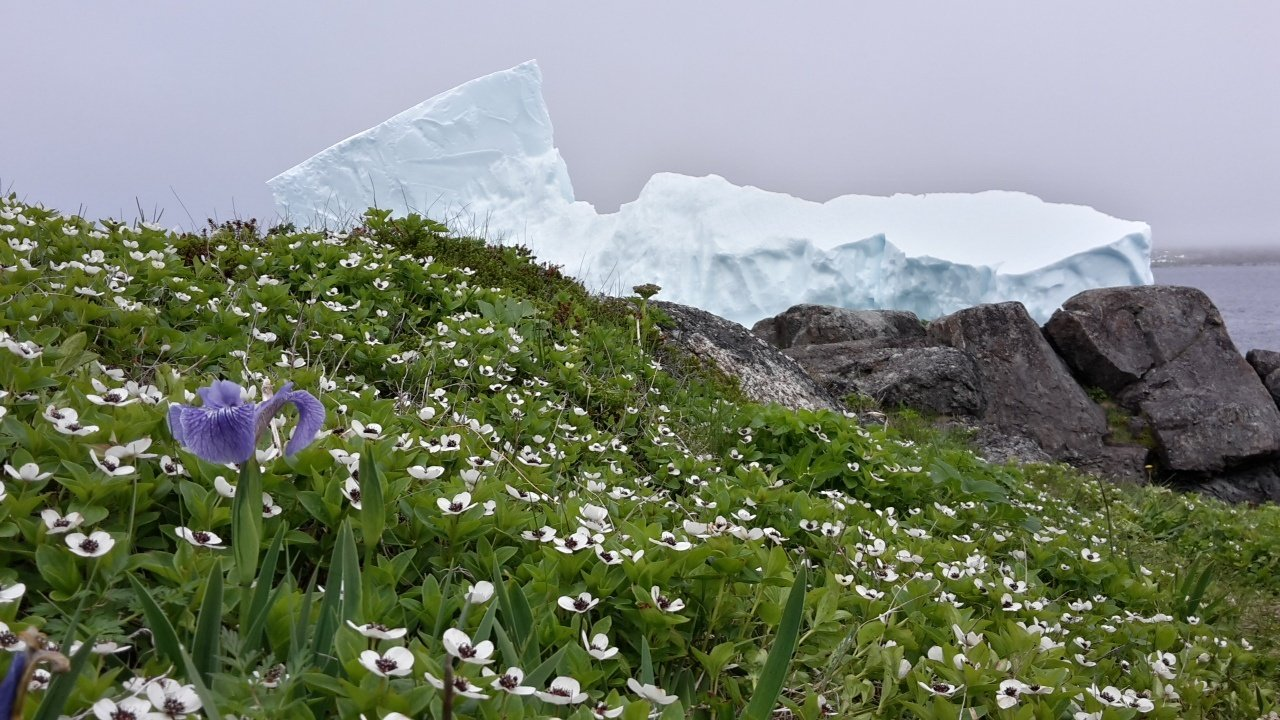 Newfoundland bicycle tour iceberg and flower