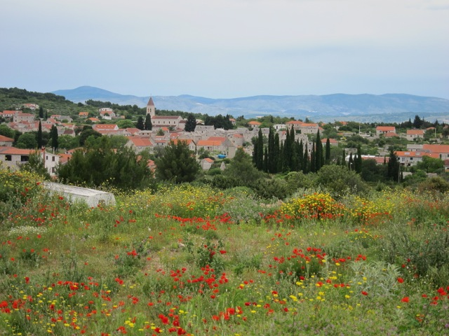 Croatia dalmatia islands bike tour flowers