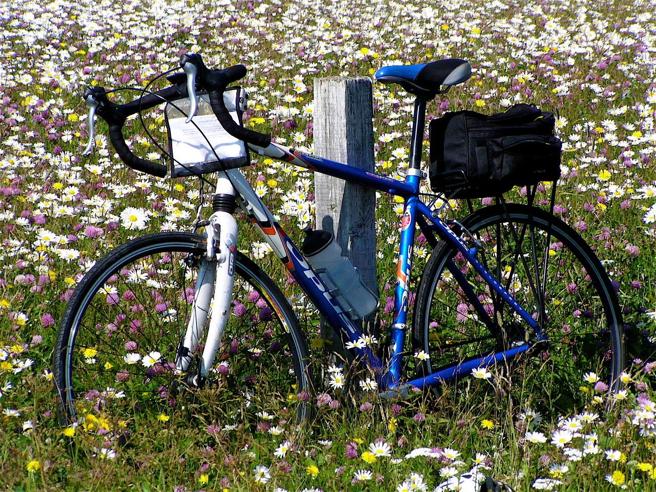 Nova Scotia Evangeline bike tour bike in flowers