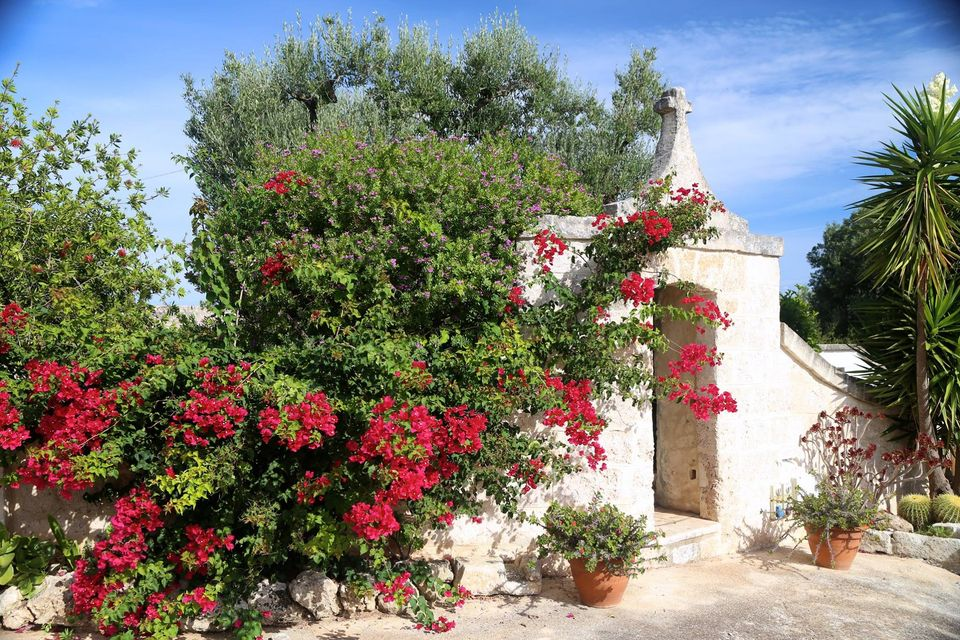red flowers on a white Italian building